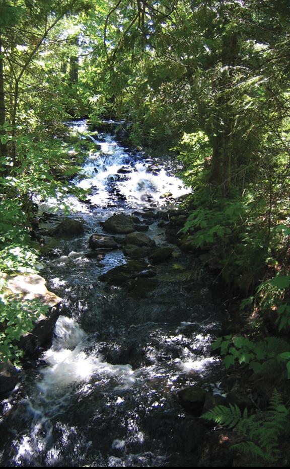 Jasper Creek Falls