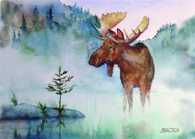 ely mn moose